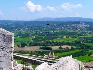 vignoble du Lubéron