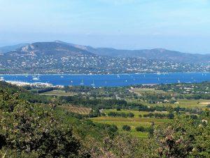 vignobles de la presqu'île de Saint-Tropez